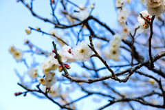 Naritasan Park Royalty Free Stock Photos