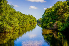 Nariva flod Royaltyfria Foton