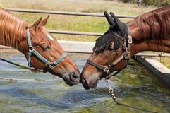 Nariz a cheirar Foto de Stock Royalty Free