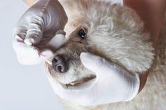 Nariz de cão da limpeza foto de stock royalty free