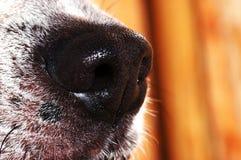 Nariz de perro imágenes de archivo libres de regalías