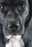 Nariz de perro mojada Imagen de archivo libre de regalías