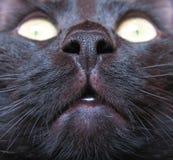 Nariz del gato Foto de archivo libre de regalías