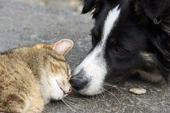 Nariz del gato de la nariz de perro Fotos de archivo libres de regalías