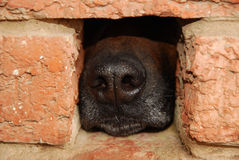 Nariz del perrito Foto de archivo libre de regalías