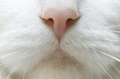 Nariz do gato fotografia de stock royalty free