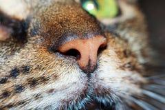 Nariz dos gatos imagem de stock