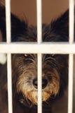 Nariz ponting del perrito lindo del pequeño perro en la jaula del refugio, emotiona triste Imagen de archivo libre de regalías