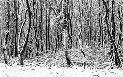 Narnian Winter Forest Royalty Free Stock Photos