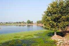 Narora lake at the village of Khajuraho Royalty Free Stock Photos