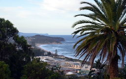 Narrabeen beach from Collaroy Plateau. (Sydney, NSW, Australia). Palm Tree in the foreground Stock Images