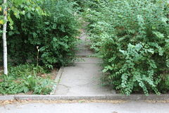 A narrow asphalt path stretches between the green bushes. stock photography