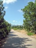 A narrow asphalt road on a hot Sunny day past evergreen trees and sun-scorched grass royalty free stock photos