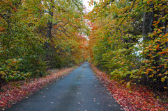 An narrow autumn leafy lane in Scotland. Stock Photography