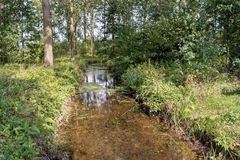 Narrow brook with crystal clear water in a Dutch forest. It is a sunny day in the end of the summer season royalty free stock image