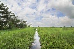 Narrow canal through a swamp Stock Photos
