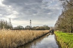 Reeds and grass along a canal stock images