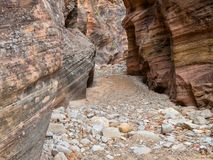 Narrow canyon, Clear Creek in Zion royalty free stock image