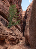 Narrow canyon with tree Stock Image