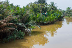 Narrow channel of Mekong Delta Stock Image