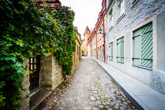 A narrow cobblestone street, in the Old Town of Tallinn, Estonia Stock Photos