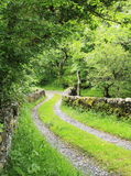 Narrow country road. Single track country lane with traditional dry stone walls and trees Stock Photography