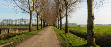 Narrow country road between a row of trees Royalty Free Stock Photography