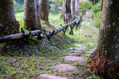 Narrow depth of field Nature walkway. Narrow depth of field green nature walkway Royalty Free Stock Photos