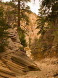 Narrow desert canyon Royalty Free Stock Photography