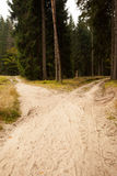 Narrow dirt road leading to two different track along trees royalty free stock images