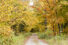 Narrow dirt road. Single lane dirt road through woods near Errol, New Hampshire Stock Photos