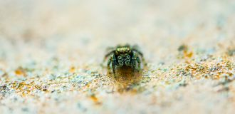 Slim Spider. The narrow DOF allowed for an interesting take on this tiny spider royalty free stock image