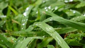 narrow för gräs för djupdaggfält royaltyfria bilder