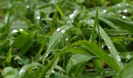 narrow för gräs för djupdaggfält arkivfoton