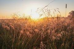 narrow för gräs för djupdaggfält Royaltyfria Foton