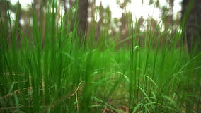 narrow för lawn för green för djupfältgräs arkivfilmer