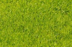 narrow för lawn för green för djupfältgräs royaltyfri bild