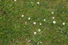 narrow för lawn för green för djupfältgräs royaltyfria foton