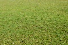 narrow för lawn för green för djupfältgräs arkivfoton