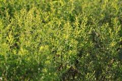 narrow för lawn för green för djupfältgräs arkivfoto