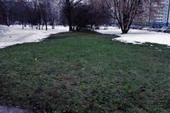 narrow f?r lawn f?r green f?r djupf?ltgr?s Vinter royaltyfri bild