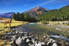 The narrow fast seething small river. Idyllic landscape. National park Krimml falls in Austria. Upper courses of falls - rather narrow fast seething small river Stock Photo