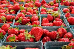 Narrow focus horizontal strawberries Royalty Free Stock Photos