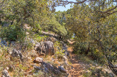 A narrow foot path through the Mediterranean bushes and trees an Royalty Free Stock Image