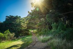 A narrow foot path winding along the edge of a pine forest on the slope of a hill. Beautiful sunny day in Wellington, New Zealand stock photo