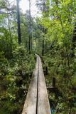 A narrow footbridge through a forest Royalty Free Stock Image