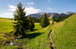 Narrow footpath along the forested hills. Beautiful landscape of Carpathian mountains in springtime. small brook flows among the spruce trees in parallel to Stock Photo
