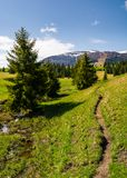 Narrow footpath along the forested hills. Beautiful landscape of Carpathian mountains in springtime. small brook flows among the spruce trees in parallel to Royalty Free Stock Photos