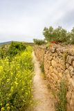 Narrow footpath along a stone fence on the Way of St. James, Camino de Santiago in Navarre, Spain, route Maneru-Cirauqui stock images