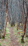 Narrow footpath goes through the forest Stock Photography